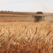 L'Espagne, leader européen de la surface dédiée à la production bio